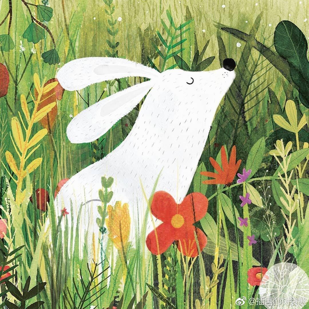 国外插画师 Carmen Saldaa 森林动物乐园绘本插画设计作品森林里的小