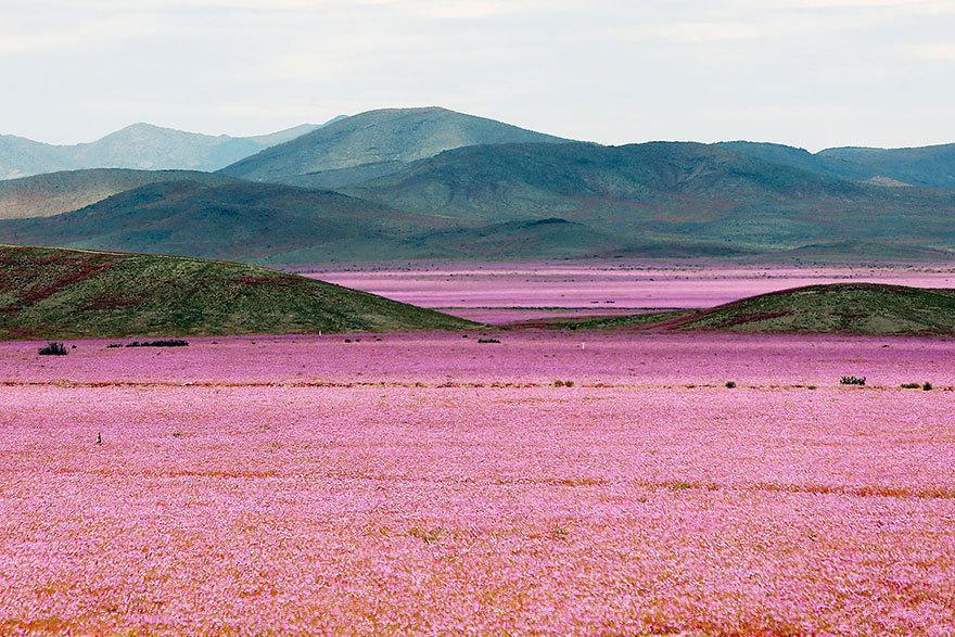 智利阿塔卡马沙漠,这里本是世界上最干燥的沙漠