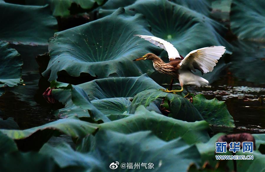 福州 ,色彩斑斓,动物悠闲自在,你喜欢吗? 图片新华网