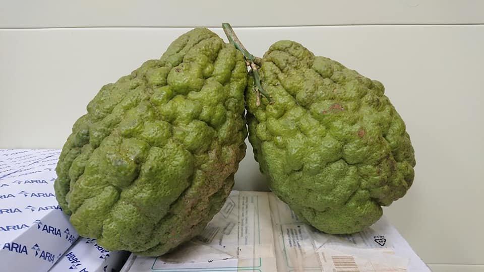 吃了这个恶魔果实能变身绿藻头?