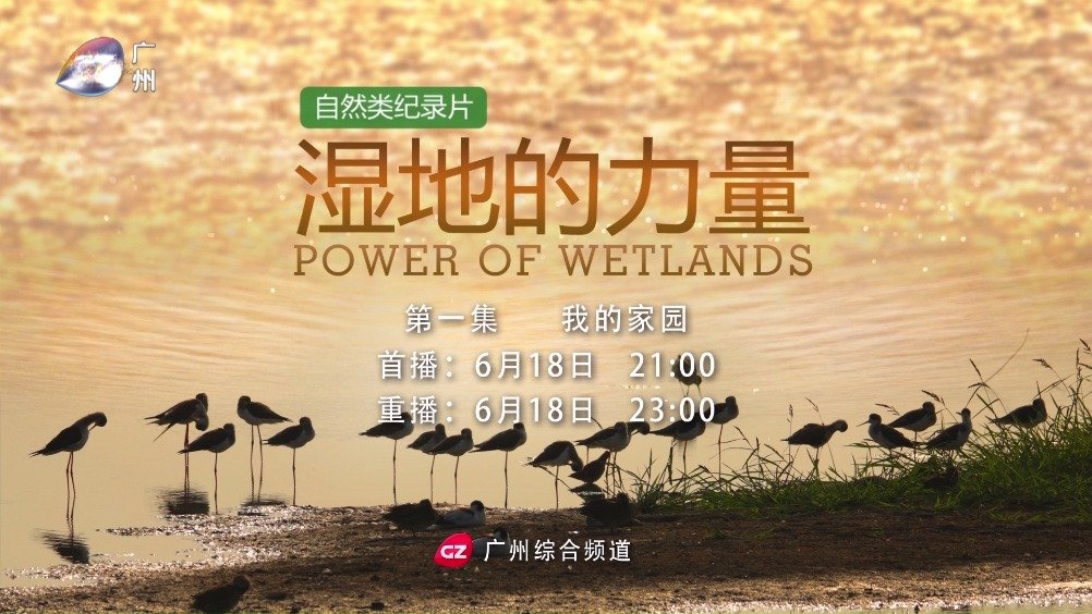 自然类纪录片《湿地的力量》第一集《我的家园》,将于6月18日晚9时