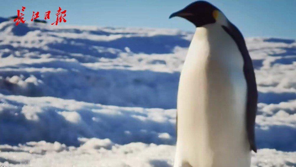 武汉一群90后博士去南极科考,极光照片登上《Nature》
