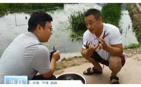 涉县80后小伙靠小龙虾走上致富路,到底有什么绝招?