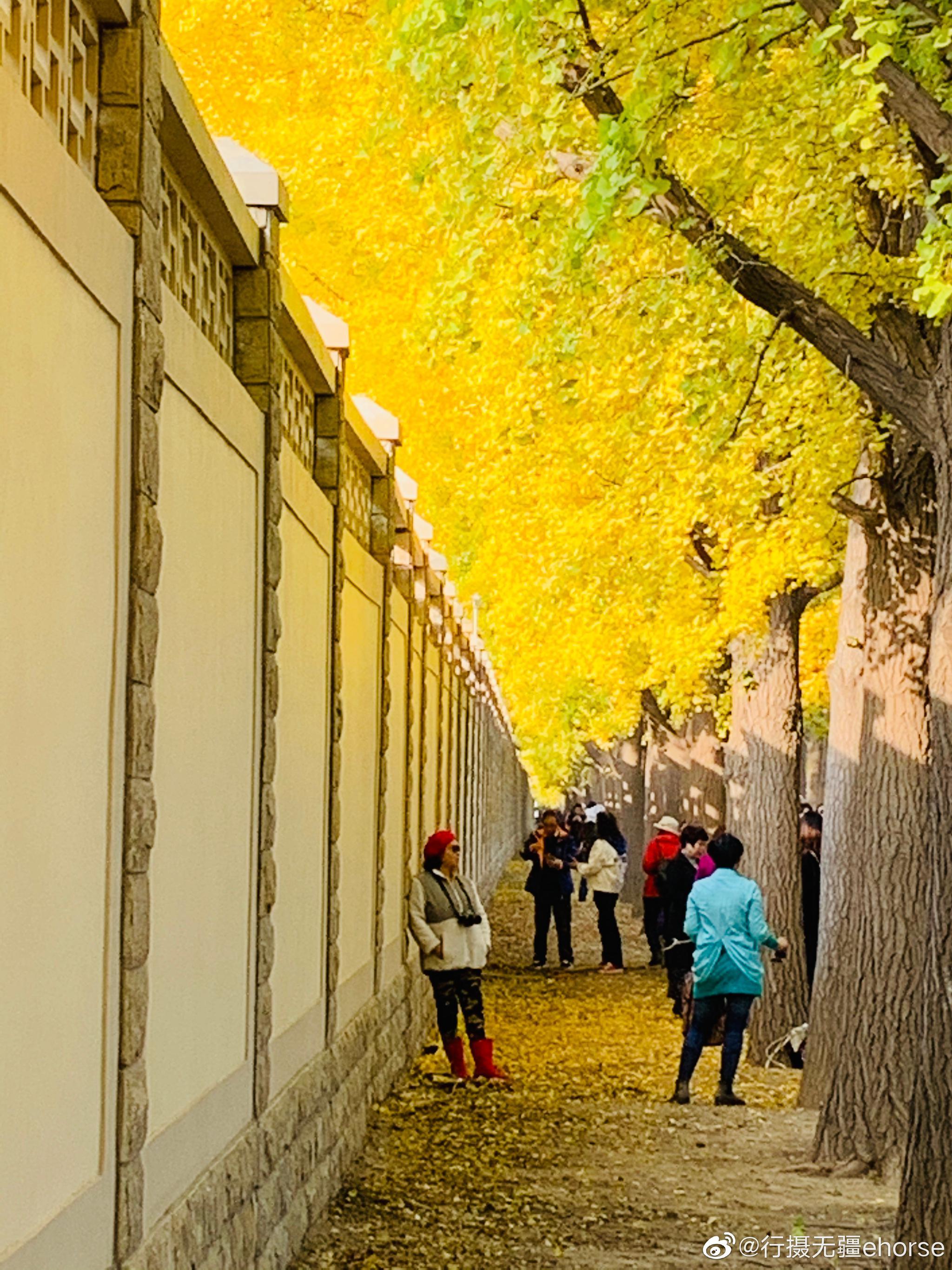 11月上旬,帝都北京色彩斑斓,迎来了最美最舒适的秋季