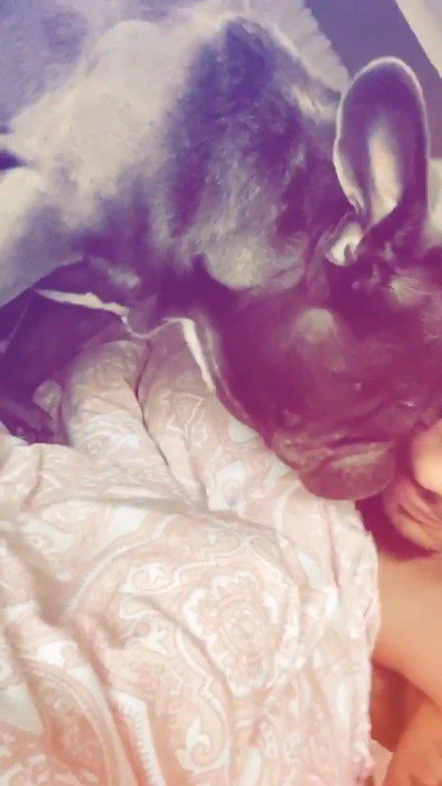 马尔库伊爱犬的叫醒服务