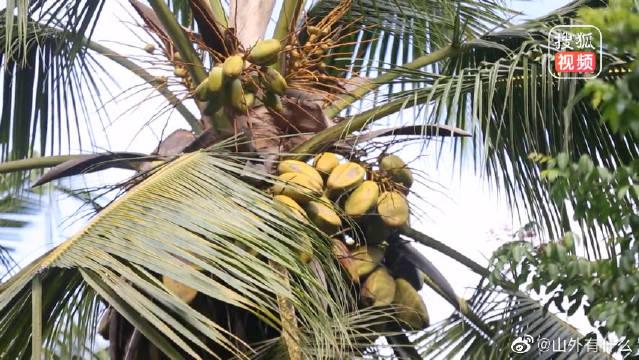 探秘塞舌尔第二大岛普拉兰岛,岛上国宝海椰子让女人看见后脸红