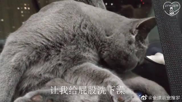 猫咪洗澡还不忘臭美:羡慕这大长腿吗?铲屎官:把你小短腿收起来