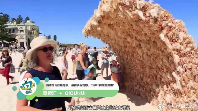 海滩惊现肤色海浪,游客凑近观察,下秒吓得拔腿就跑!