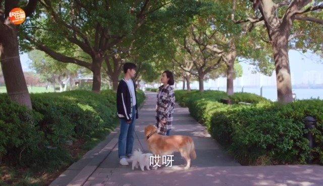 小狼狗主动出击追求漂亮姐姐,还一起遛狗散步
