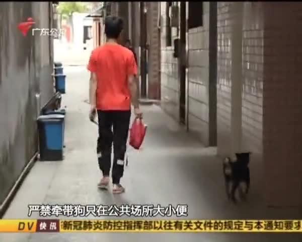 一律捕杀!东莞一小区发布最严通知,不允许社区放养狗只丨DV现场