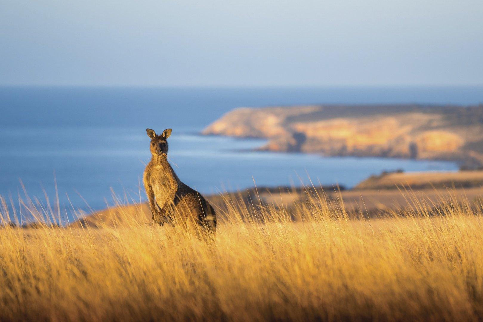 南澳大利亚怎么玩?晓明哥的吃玩之旅,值得参考一下
