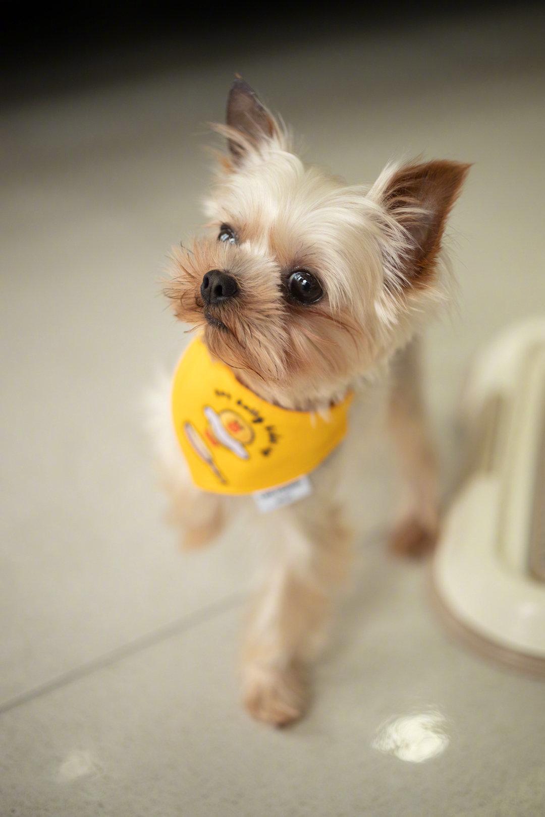 网友的狗狗征婚:姓名:豆包,性别:男,品种
