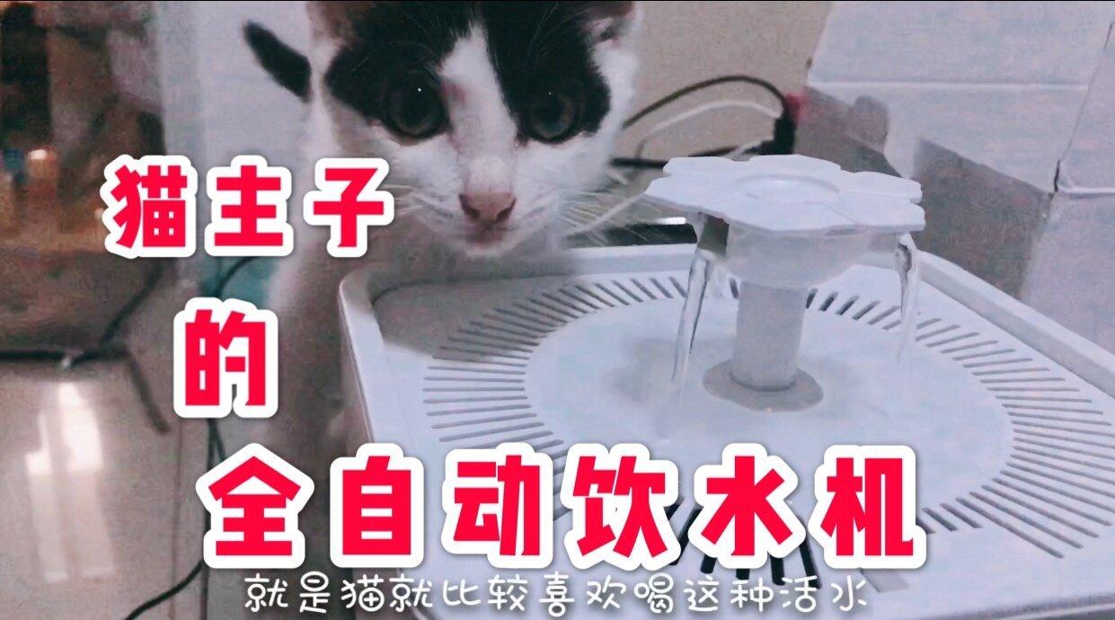 给猫主子小螃蟹买了全自动的饮水机,只因为听说猫喜欢喝活水