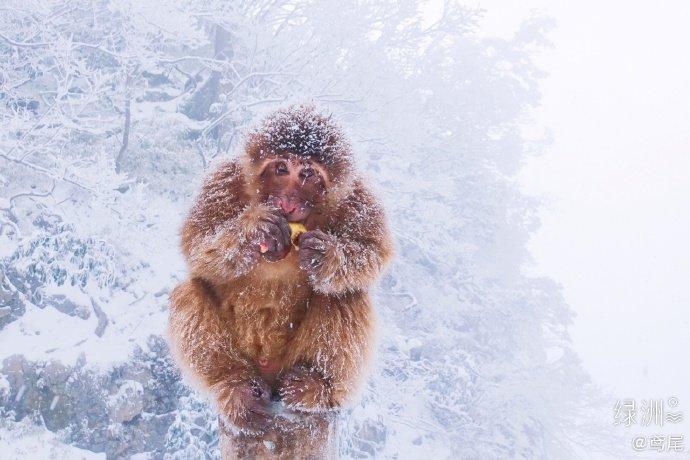 峨眉山雪猴 !雪中的峨眉山,像极了水墨画,禅意十足