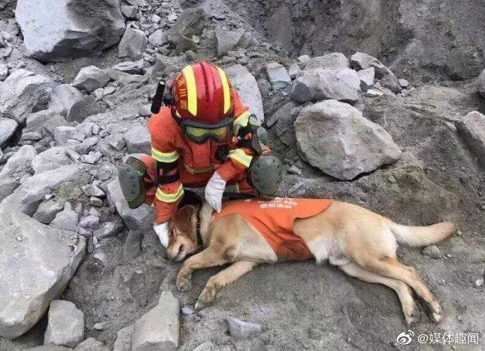 搜救犬:它们付出一生,只为我们的平安