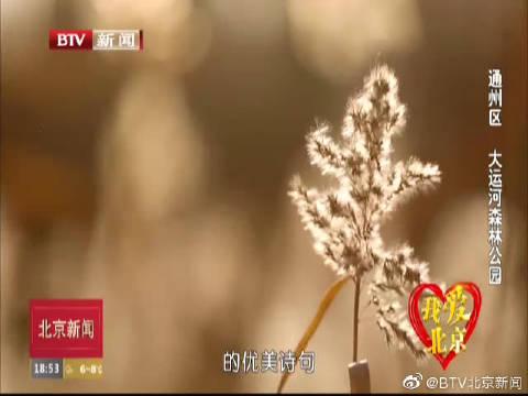 我爱北京:通州区大运河森林公园