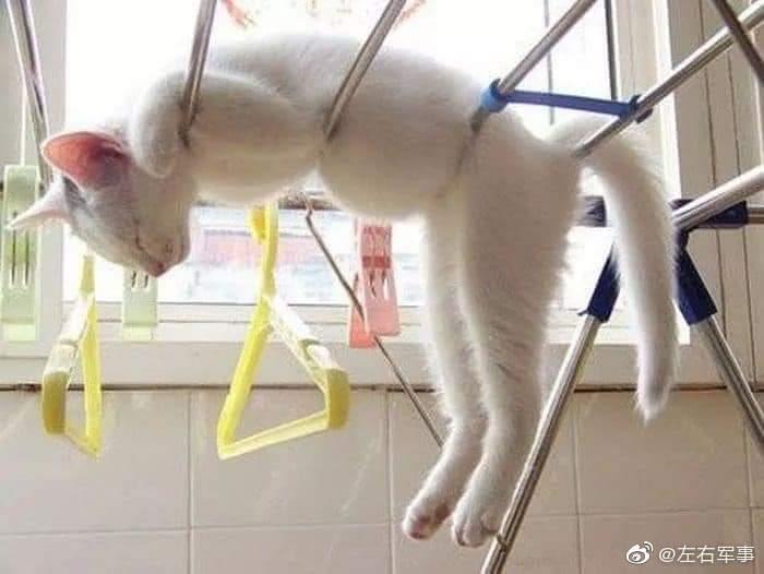 你永远不知道你的猫是怎么睡觉的……