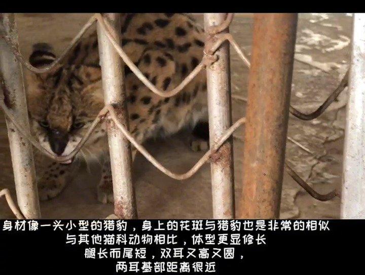 """大青山野生动物园的""""新朋友""""亮相啦"""