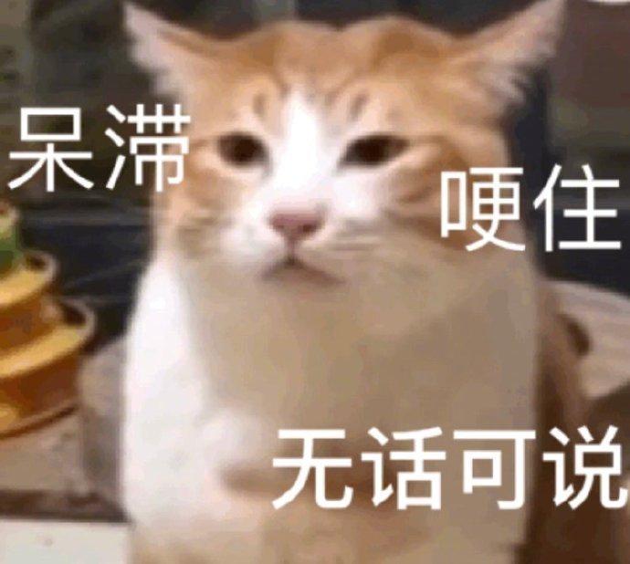 猫猫沙雕表情包