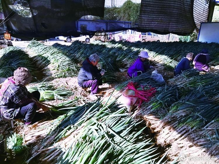 """这种徐州人喜爱的""""冬囤菜""""近期降价40%"""