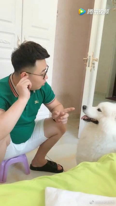 主人警告萨摩耶不要靠近他,狗狗一个动作让他彻底无语