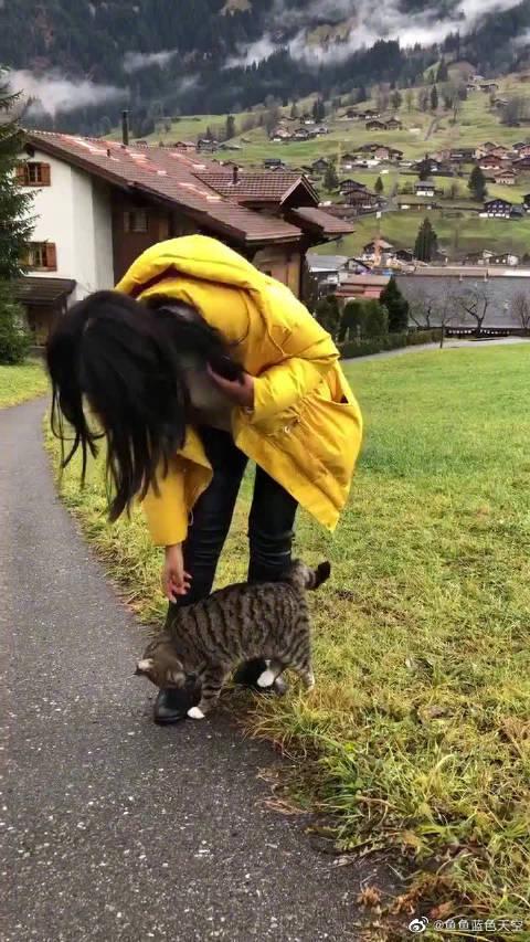 中华狸花猫在国外遇见了自己的老乡