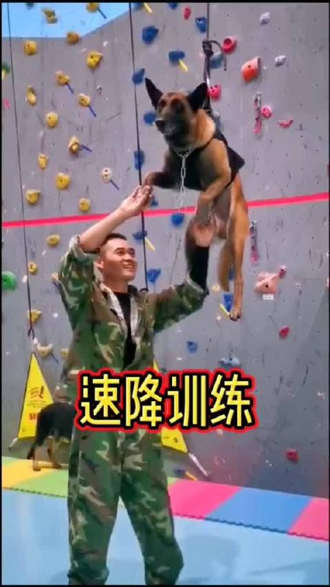 首都警犬速降训练毛孩子自带螺旋桨酷哟