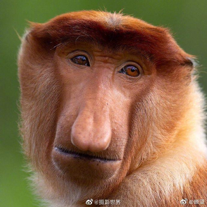 摄影师 Mogens Trolle 用20多年时间捕捉到了许多动物脸上的微表情