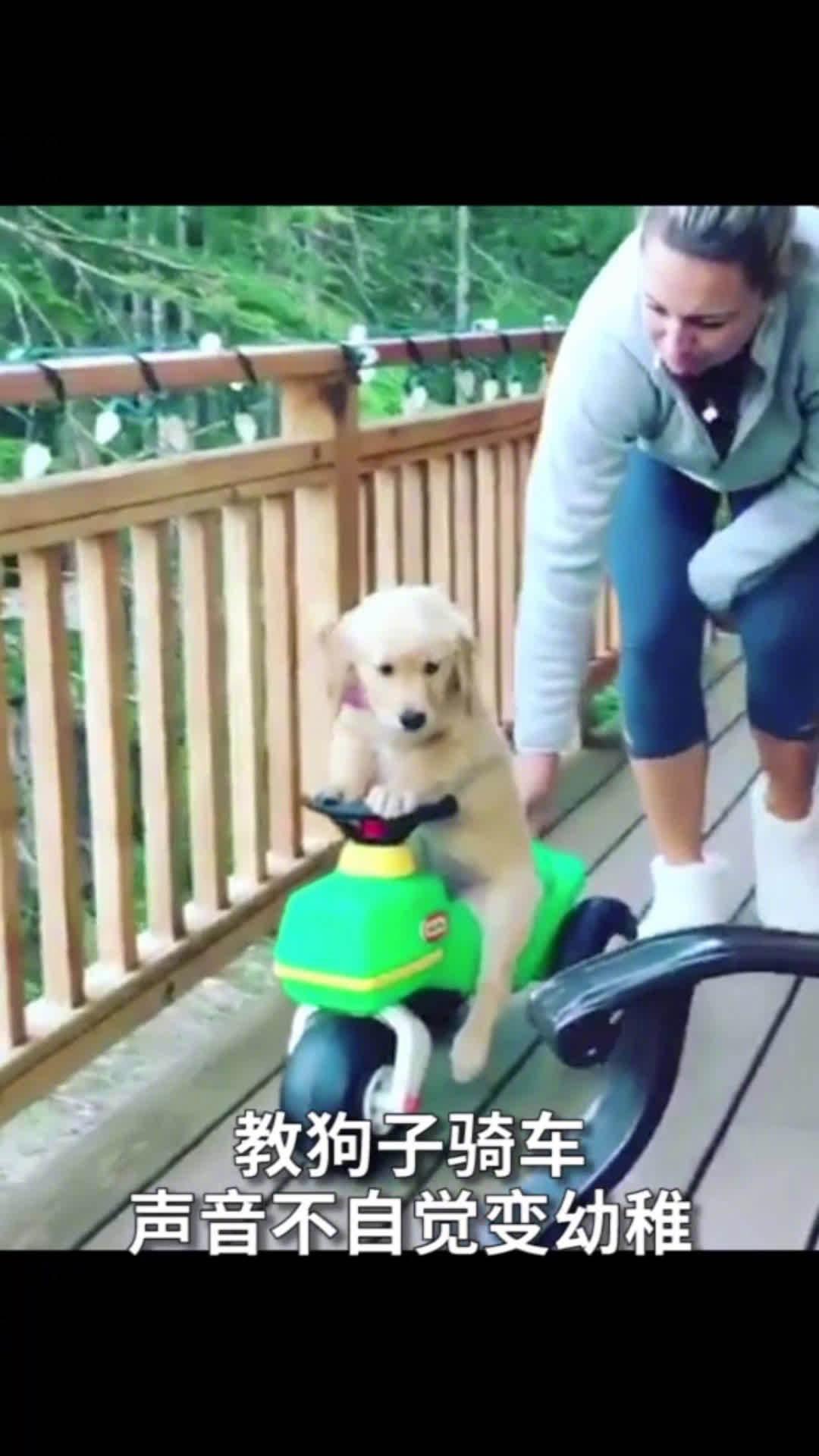 养狗久了之后,你也会不自觉地把狗狗当自己的小宝贝吗