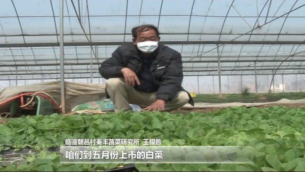 临潼:复耕复产抓农耕 消毒防疫两不误