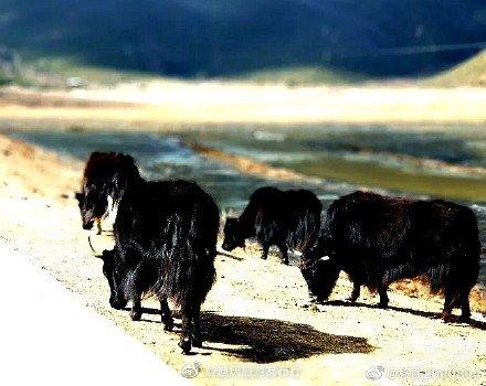纳帕海,位于迪庆藏族自治州的香格里拉县