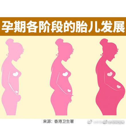 孕期各阶段的胎儿发展