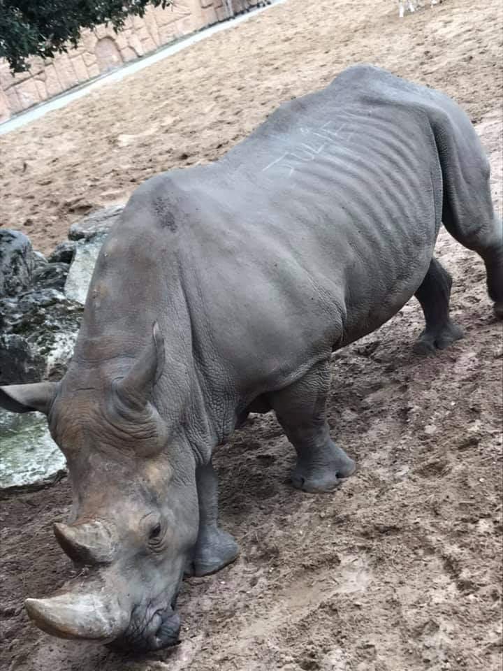 无良游客哪都有,法国动物园犀牛遭刻字