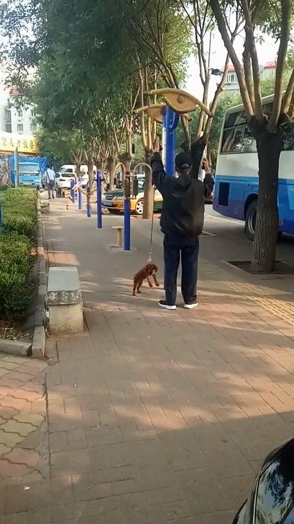 狗:我TM谢谢你带我运动!