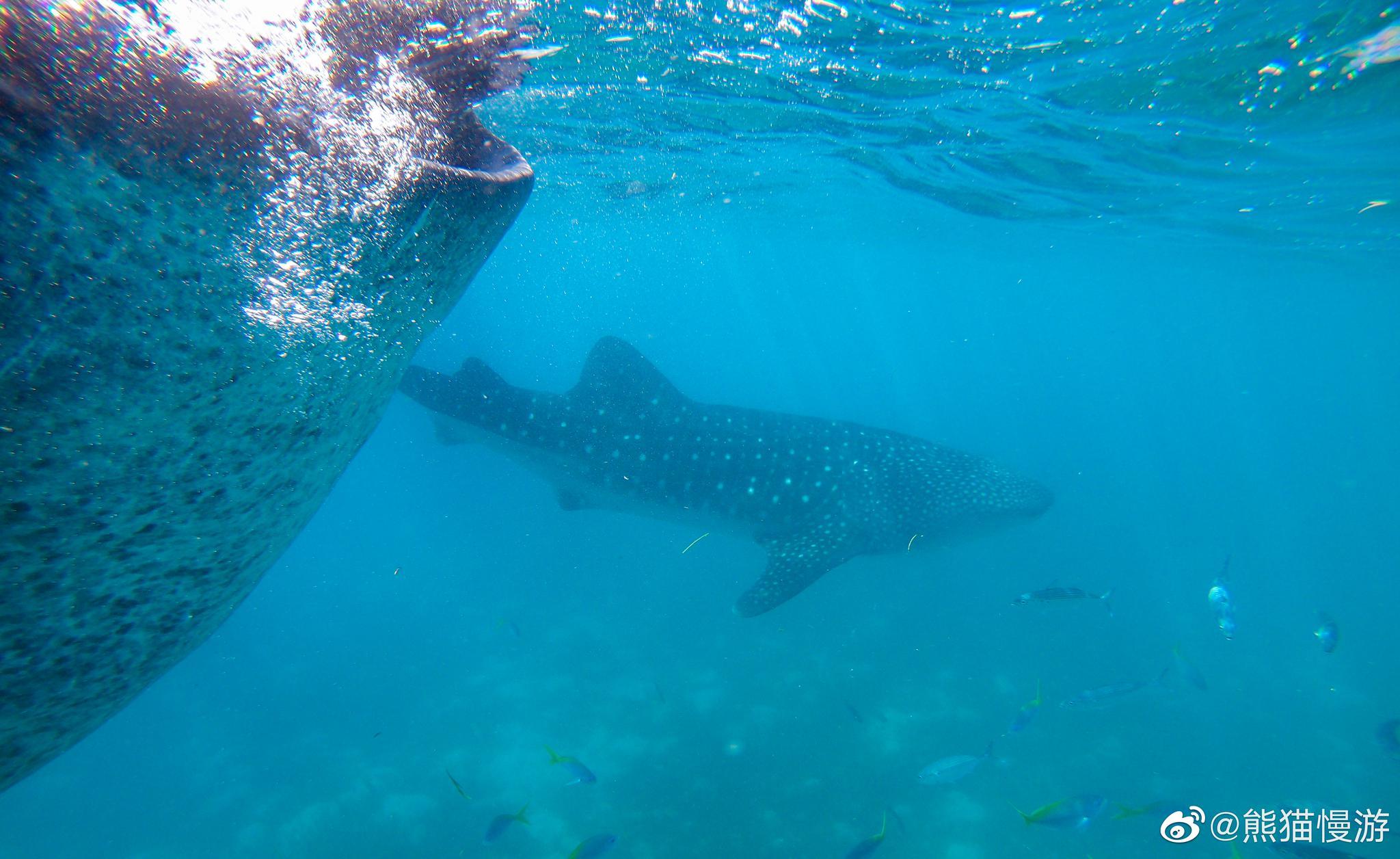 位于宿务本岛的奥斯洛布是出名的观鲸点