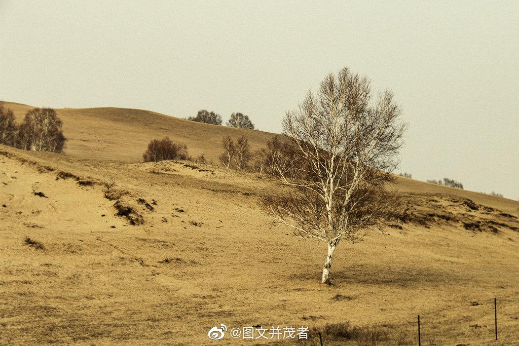 阔别已久的内蒙古高原,今天,你的容颜怎样了呢?!
