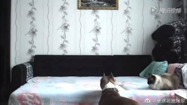 主人偷拍视频,不被允许上床的狗狗独自在家是啥样
