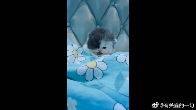 软萌的小宝宝,困得小样,差一点就睡着了,一激灵醒了!