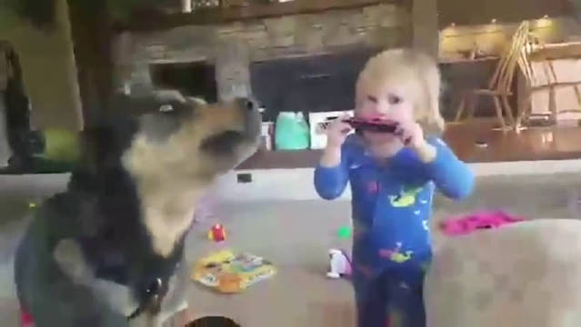 狗狗嫌弃宝宝弹钢琴,连忙捂耳朵,好难听呀。