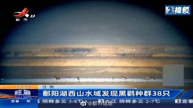 江西鄱阳湖西山水域发现黑鹳种群38只