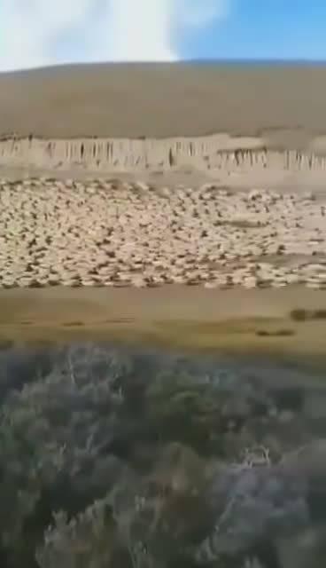 据说是蒙古国捐赠的3万只羊,赶往口岸路上的场景