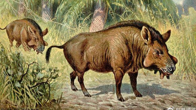 这种史前巨猪因同类相残又称残暴猪,个头像牛一样,重量可达一吨