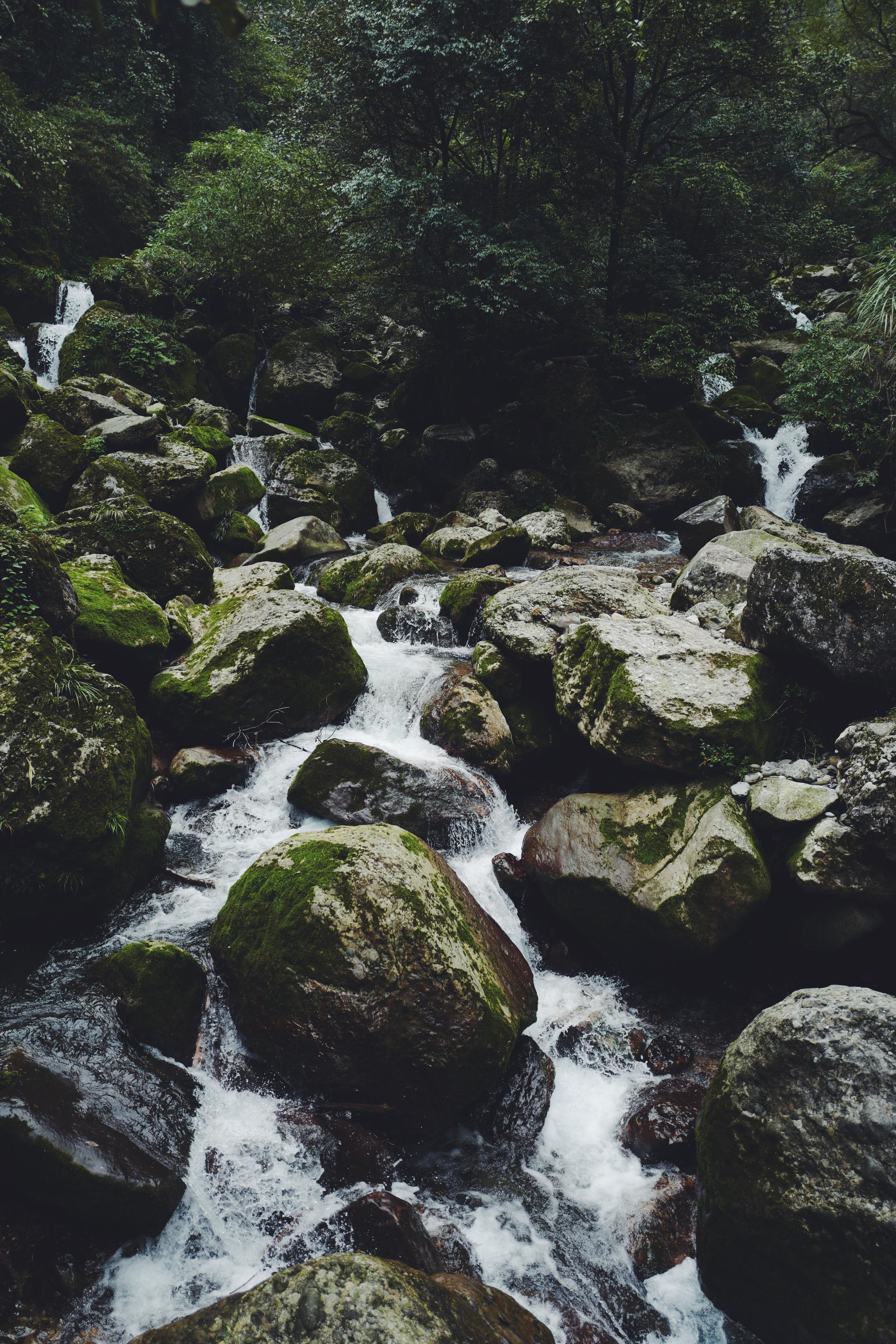 347。-都江堰-青城山森森的绿色原始气息