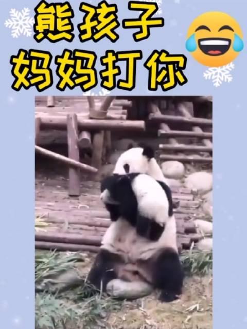 熊孩子不听话,结果被熊妈妈揍了。关注@热门表哥 观看更多热门视频