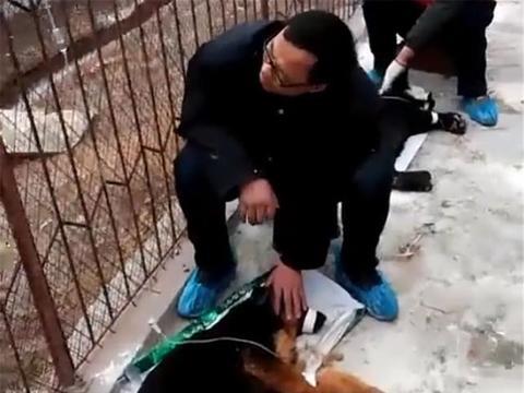 田园犬生病,大爷抱着狗子输液眼含深情,网友:幸福的狗狗……
