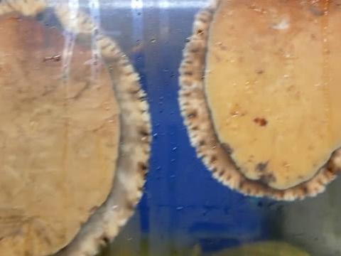 """在韩国吃海鲜,看到鱼缸上贴着很多黄色""""大饼"""",走近一看笑了"""