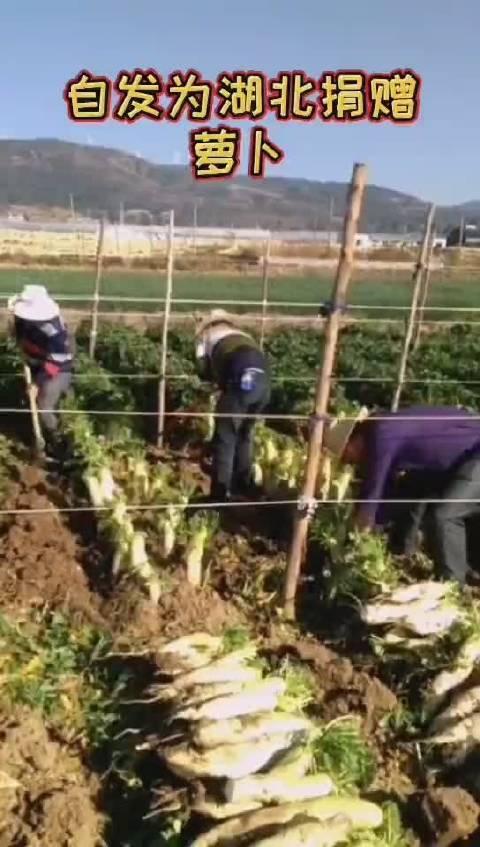千里驰援湖北,云南省楚雄州禄丰碧县城镇100吨蔬菜已发出!请查收