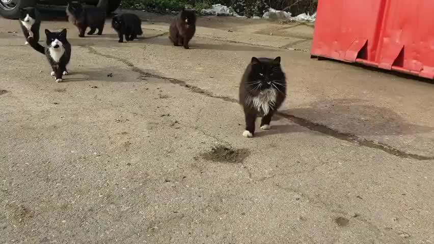 黑猫团伙来袭,面相超凶的!