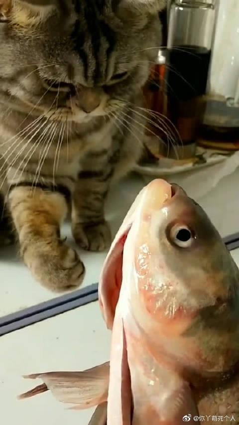 猫:这么大条鱼,主人给我吃点吧!
