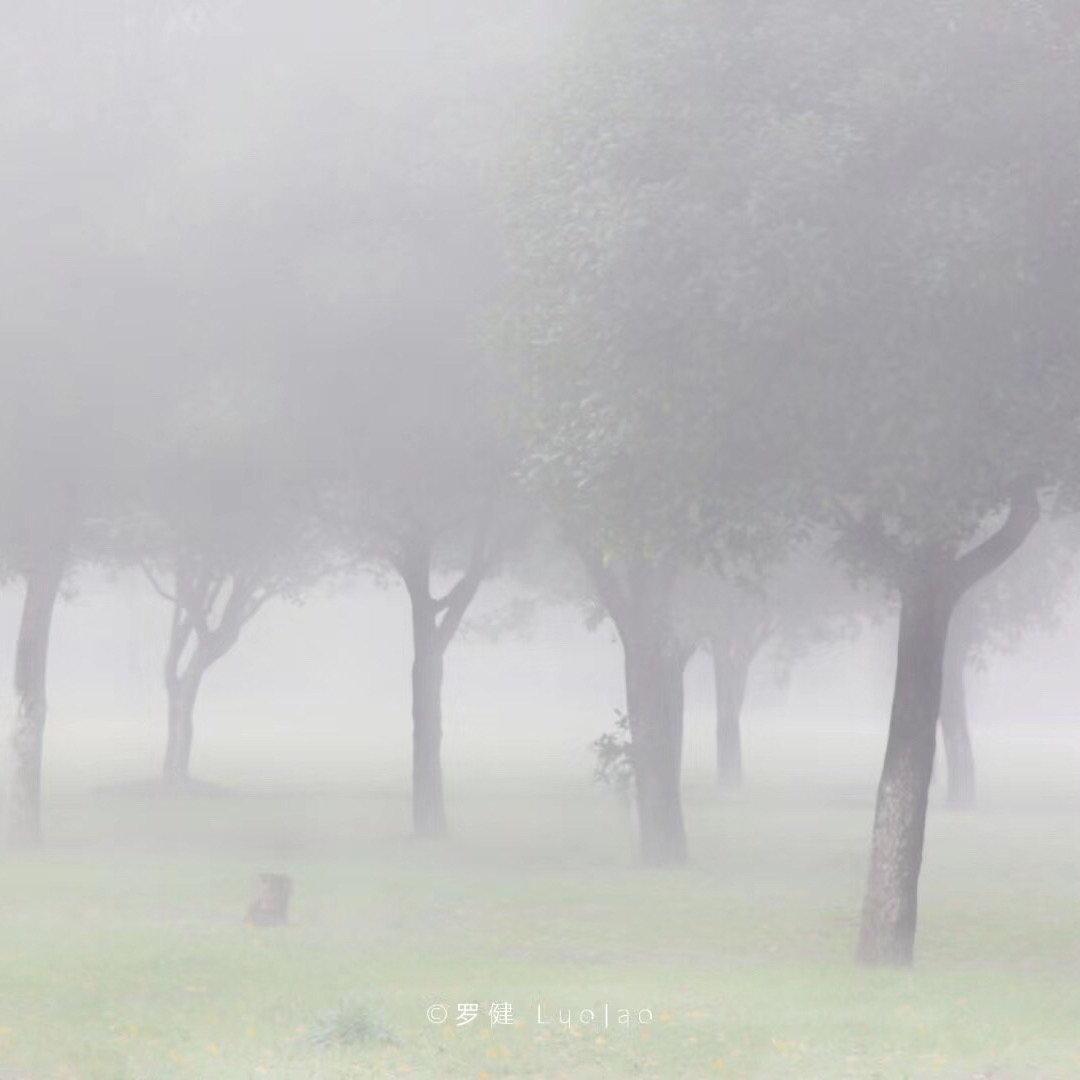 雾里看大学校园 6日的清晨,花溪大学城,雾!图/@贵州罗健